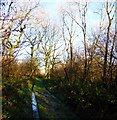SU9415 : The bridleway through Crown Tegleaze from Upwaltham by Shazz