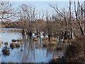 SZ1497 : Hurn: flooded Avon watermeadows by Chris Downer