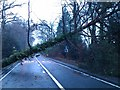 SU2918 : Fallen tree blocking A36 by David Martin