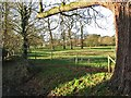 TL3266 : Conington Hall and park by John Sutton