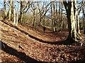 SP9513 : Sunken path in Turlhanger's Wood by Rob Farrow