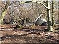 SP9513 : Three fallen trees, Aldbury Nowers by Rob Farrow