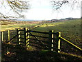 NZ0960 : Bridlepath Gate into Hyons East Wood by Clive Nicholson