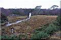 NG7932 : Railway bridge by Richard Dorrell