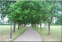 TG1807 : Tree lined path by N Chadwick