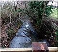 SO4107 : Vigorous stream near Raglan by Jaggery