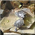SD4861 : Two turtles by Gerald England