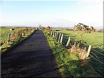 H5572 : Gap Road, Mullaghslin Glebe by Kenneth  Allen
