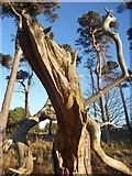 NT6378 : East Lothian Landscape : The Howling Beast Of Hedderwick by Richard West