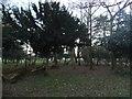 TQ1491 : The Cedars, Uxbridge Road by David Howard