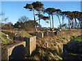 NT6378 : Coastal East Lothian : Anti-tank Blocks Near Hedderwick Hill by Richard West