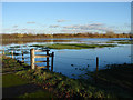 TQ0467 : Chertsey floods 2014 by Alan Hunt