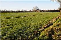 SO4841 : Farmland near Huntington by Philip Halling
