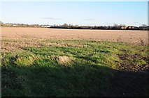 SO4841 : Stubble field near Huntington by Philip Halling