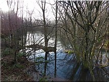 NS3976 : Pond beside cycle path by Lairich Rig