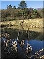 SO3393 : Pond near Heath Plantation by Dave Croker
