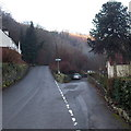 SO5200 : Side road near a Forge Road monkey puzzle, Tintern by Jaggery
