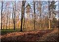 SE3244 : Wall Side Plantation by Derek Harper