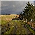 NX2963 : Drummurrie by Andy Farrington