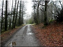 H5776 : Dirty path, Loughmacrory by Kenneth  Allen