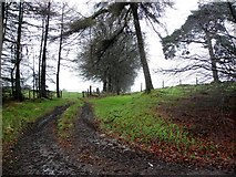 H5776 : Countryside at Loughmacrory by Kenneth  Allen