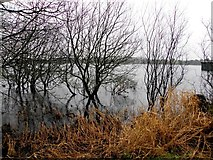 H5776 : Lough, Loughmacrory by Kenneth  Allen