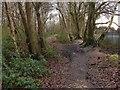 SU8561 : Wooded footpath by Alan Hunt