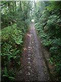 SX0656 : Luxulyan Valley Trail by Chris Gunns