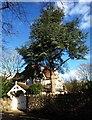 ST5577 : House on Grove Road, Coombe Dingle by Derek Harper