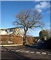 ST5577 : Pitchcombe Gardens, Coombe Dingle by Derek Harper