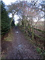 TL0018 : Icknield Way towards the Tree Cathedral by Philip Jeffrey