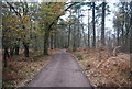 SU8530 : New Lipchis Way, Stanley Common by N Chadwick