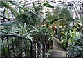 NH6543 : Tropical House, Inverness Botanic Gardens by Craig Wallace
