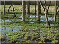 SU8559 : Hawley Meadows by Alan Hunt