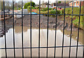 J3773 : The Knock River (old course), Orangefield Park, Belfast by Albert Bridge