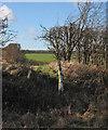 TL3854 : Footpath to Little Eversden by John Sutton