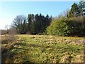 NS3977 : Former site of walled garden of Strathleven House by Lairich Rig
