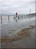 SD4578 : Tidal debris on Arnside Promenade by Karl and Ali