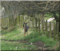 NT9807 : Wary roe deer against fence by Russel Wills