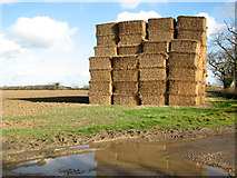 TM3984 : Straw stacked in field by Brook Farm by Evelyn Simak