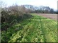 TQ9328 : Field edge near Stone-in-Oxney by Marathon