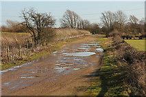 SK8166 : Trent Lane by Richard Croft