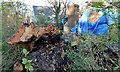 J4079 : Felled tree and damaged house, Holywood by Albert Bridge