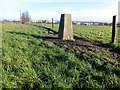SD6407 : Moor Field Trig Point S2748 by Rude Health