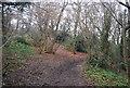 TQ4878 : Green Chain Walk, Lesnes Abbey Wood by N Chadwick