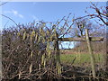 SO5479 : Hedgerow near Hopton Cangeford by Jeremy Bolwell