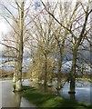 SP7211 : Trees in river floods, Cuddington Bridges by Rob Farrow