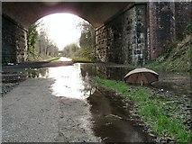 SJ9594 : Lost Umbrella by Gerald England