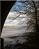 SX4561 : Tavy estuary from below Tavy Bridge by Derek Harper