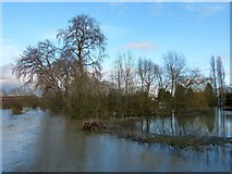 SP7006 : Marooned trees, Thame by Rob Farrow